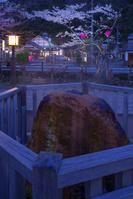 兵庫県 城崎温泉 夜桜