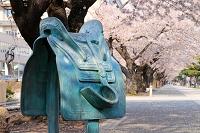 青森県 十和田市官庁街通りの桜並木