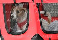 英首相、子犬「ディリン」を飼い始める 先住の猫との対立懸念