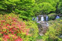 福島県 ヤマツツジ咲く江竜田の滝