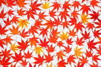一面の紅葉