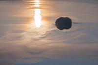北海道 湖面を漂う霧と朝の摩周湖のカムイシュ島