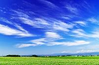 北海道 花咲く広大なジャガイモの畑