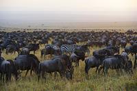 動物の群れ
