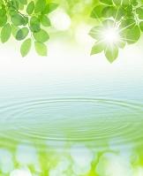 新緑と波紋