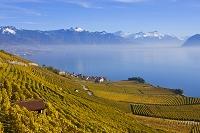 スイス ラヴォー地区 葡萄畑とジュネーブ湖