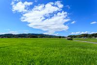 島根県 風吹く青田と夏空