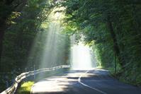 北海道 函館山の朝の道と斜光