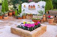冬のガーデニング (ガーデンシクラメンなどの花)