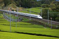 静岡県 東海道新幹線と茶畑 N700系