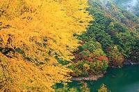 長野県 松本市 黄葉
