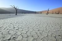 ナミビア ソーサスフレイ 砂丘