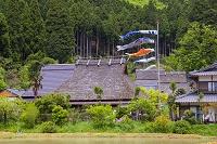 京都府 美山かやぶきの里 鯉幟と茅葺民家