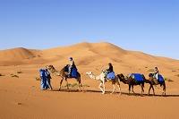 モロッコ ラクダ