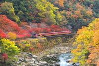 京都府 紅葉のトロッコ列車