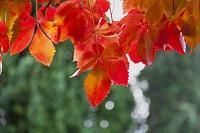スペイン グラナダ 紅葉