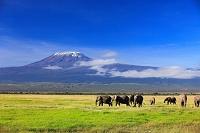ケニア アフリカ アフリカゾウとキリマンジャロ
