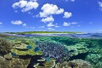 竹富島 珊瑚礁の海