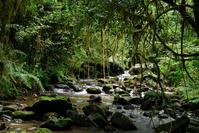 マダガスカル ラノマファナ国立公園