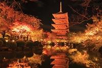 京都府 紅葉の東寺