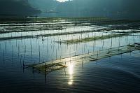 三重県 熊野灘 養殖筏
