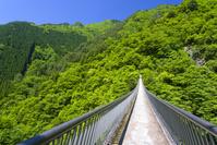 新緑の梅の木轟公園吊り橋