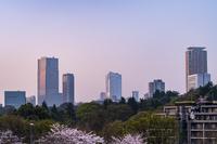 東京都 六本木の高層ビル群 朝景