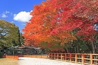 京都府 上賀茂神社の紅葉