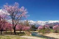 長野県 大出公園 姫川と白馬連峰