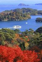 宮城県 西行戻しの松公園より モミジと松島湾