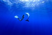 ミナミハンドウイルカと泳ぐ女性