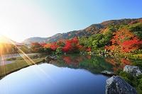 京都府 天龍寺 朝焼けに輝く曹源池の紅葉と嵐山