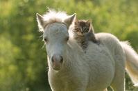 ミニチュアホースの上に乗る子猫