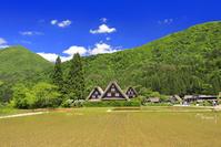 岐阜県 白川郷 かん町の合掌造り集落と新緑の山並み