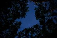 長野県 木々の間から見える星空