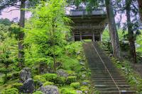 福井県 小雨に煙る新緑の明通寺 山門(仁王門)