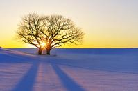 北海道 夕日と丘の二本の木