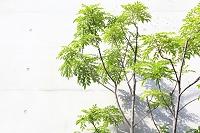 コンクリート壁と庭木