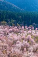 福島県 桜峠