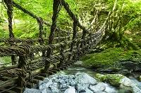徳島県 二重かずら橋