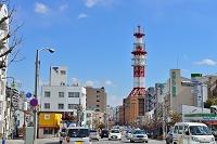 栃木県 宇都宮市街 いちょう通り