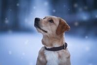 雪を見上げる犬
