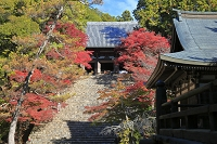 京都府 紅葉の神護寺