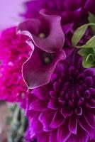 赤紫のアレンジメント