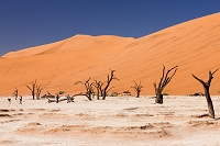 ナミビア ナミブ砂漠 デッドブレイ 砂丘 涸池 枯木 ソサス...