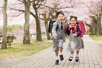 桜の並木道を走る日本人の小学生