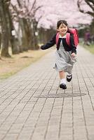 桜の並木道を笑顔で走る小学生