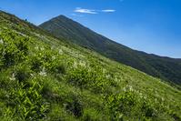 長野県 お花畑と爺ヶ岳