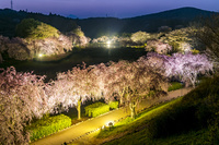 茨城県 桜咲く常陸風土記の丘 夜景