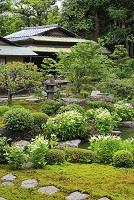 京都府 両足院 半夏生咲く池泉廻遊式庭園と茶室